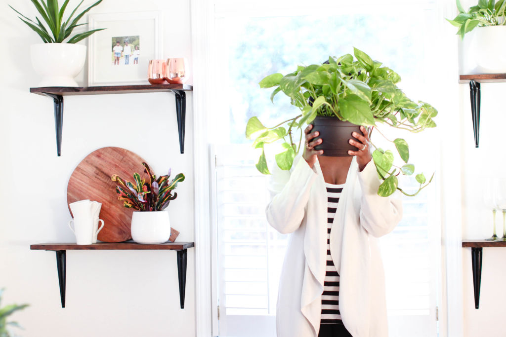 7 Easy Tips for Keeping Houseplants Alive