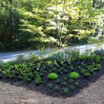 My herb and vegetable garden