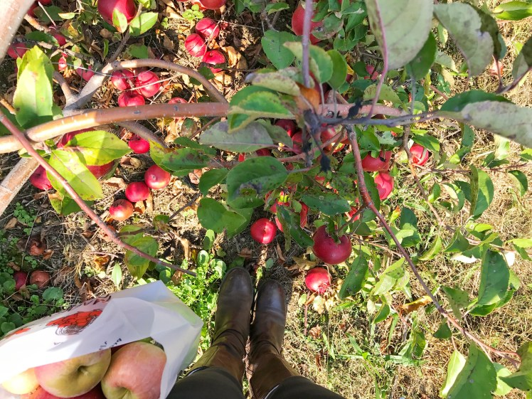 6 Things You Have To Do This Fall - orchard