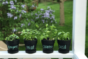 Inspiration to Make Your Own DIY Potted Herbs This Spring