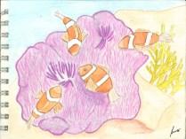 Gran Barrera de Corall, Austràlia - 11 de gener de 2015