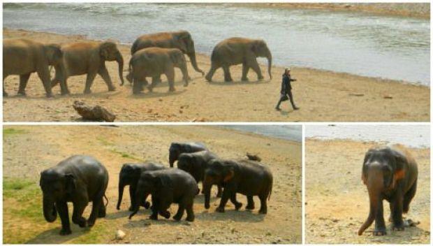 excursión de elefantes