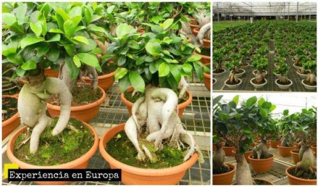 bonsai tarragona