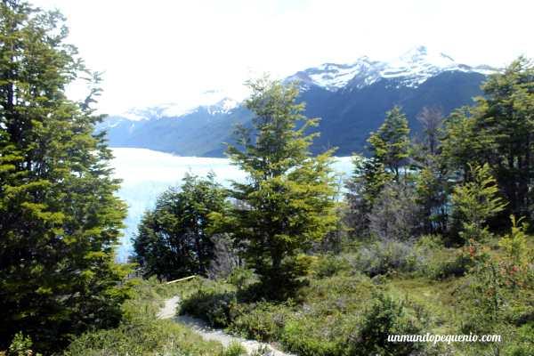 Flora parque nacional los glaciares