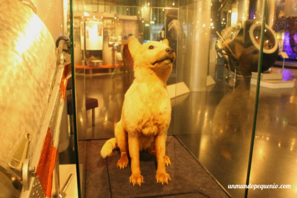 Perro astronauta soviético embalsamado