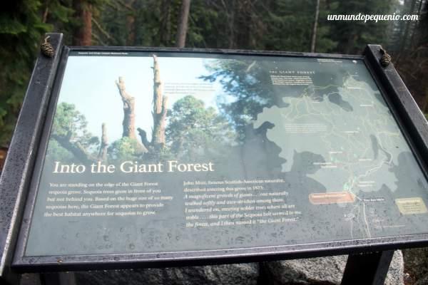En el Bosque Gigante
