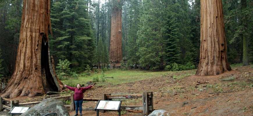Nair en el Parque Nacional de las Secuoyas - California