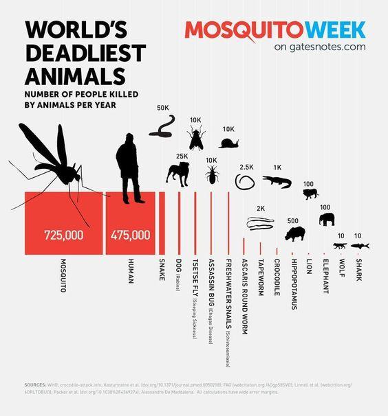 worlds-deadliest-animals