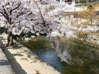 岡山県の桜の名所情報2015!ライトアップされる公園はここ!