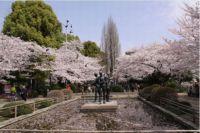 広島の桜の時期はいつからいつまで?開花予想&見頃2015