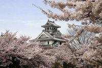 滋賀の桜の開花予想とライトアップ情報!ドライブする場合の駐車場は?