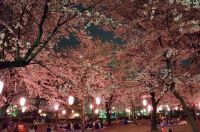 群馬の桜 名所と穴場!オススメスポットの開花予想&駐車場情報