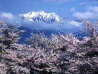 長野の桜 見頃の時期はいつ?各スポットの開花予想ならこちら!