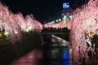 山形の桜スポット!ライトアップがキレイなオススメ夜桜はここ!
