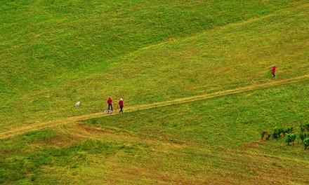 Caminante, no hay camino