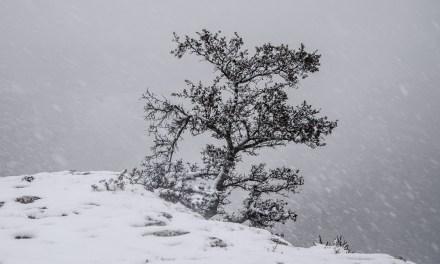 La tempestad de nieve