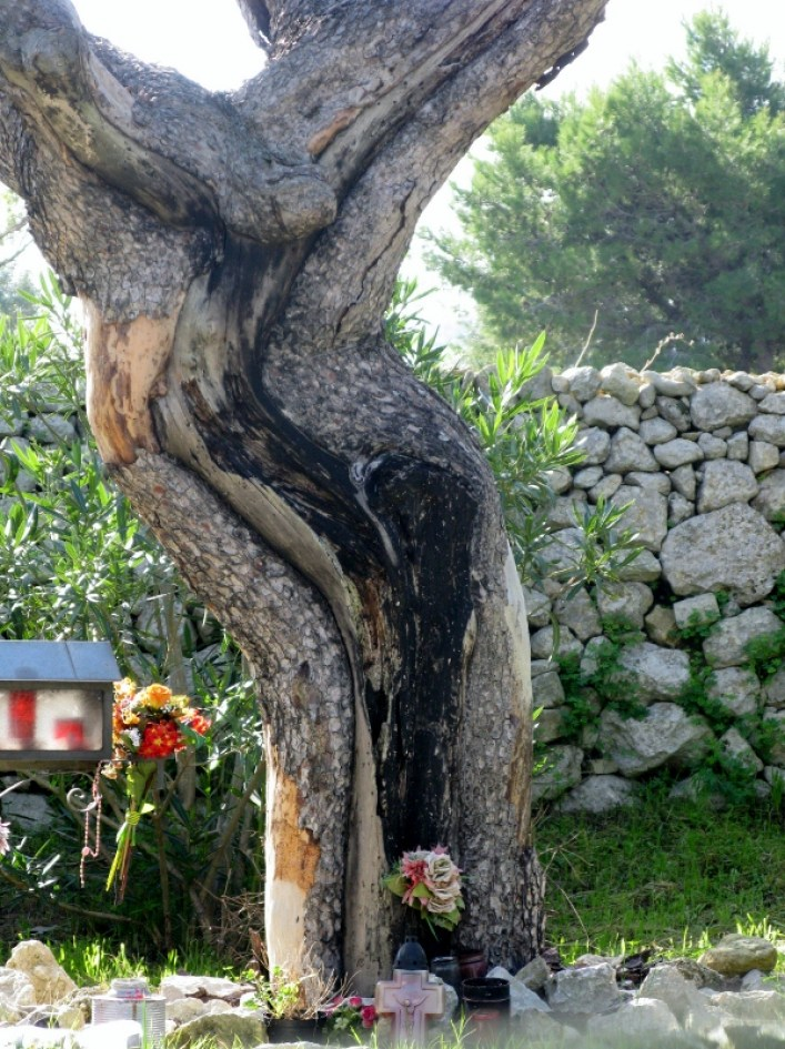Jesus Tree Malta