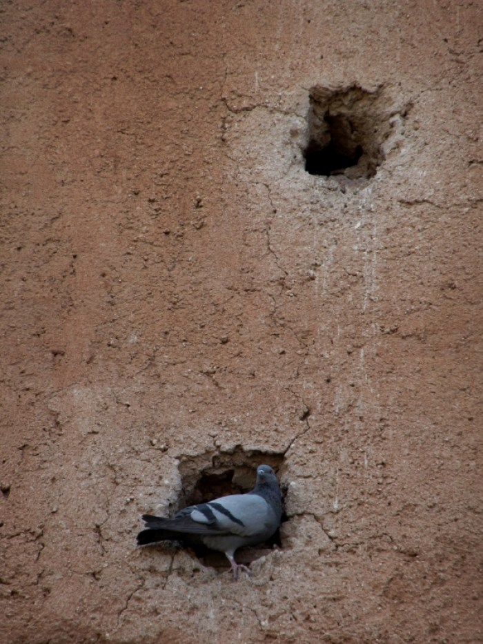 pigeons nesting in walls Marrakesh