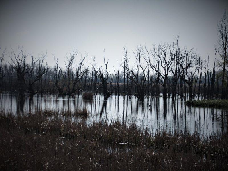 dead trees in the Kis-Balaton