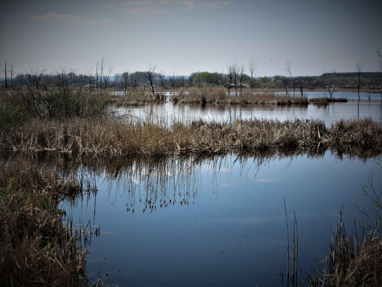 Kis-Balaton reed fields and dead trees
