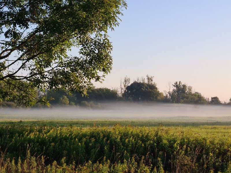 A band of Early morning mist hanging over a field in Zala, southwest Hungary