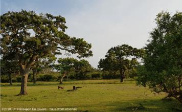 ©2019_Un_Passeport_En_Cavale_Sri_Lanka_Safari_Yala_Tous_Droits_Réservés_0213