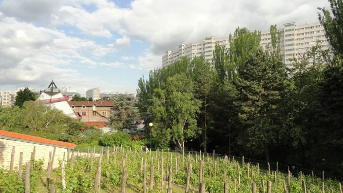 Parc Georges Brassens - Pieds de vigne