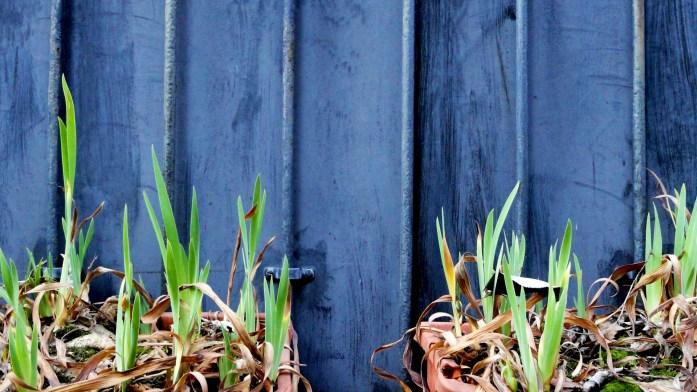 Balade le long de la Petite Ceinture (17e et 18e) - La Villa des Tulipes