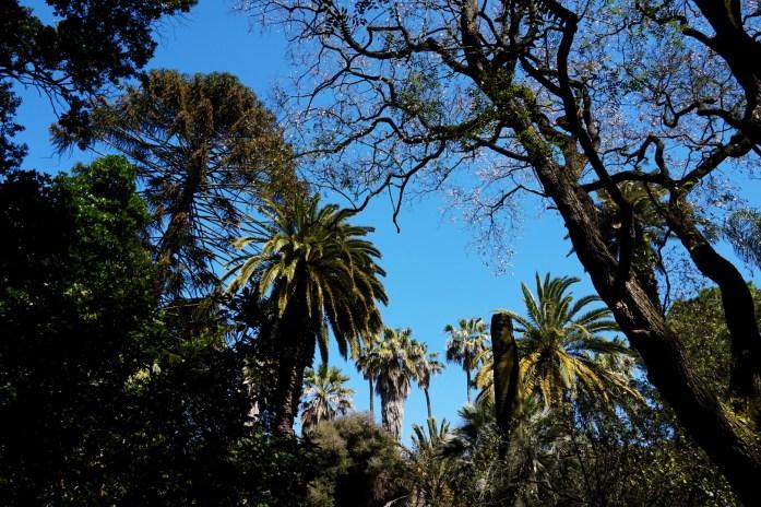 Lisbonne - Jardin Botanique Tropical