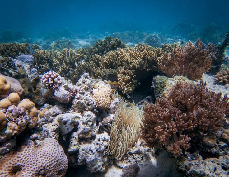 Pas mal les coraux dans le coin !