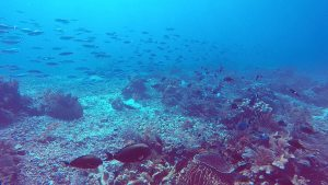 Komodo_fundive_poisson_poisson_traffic