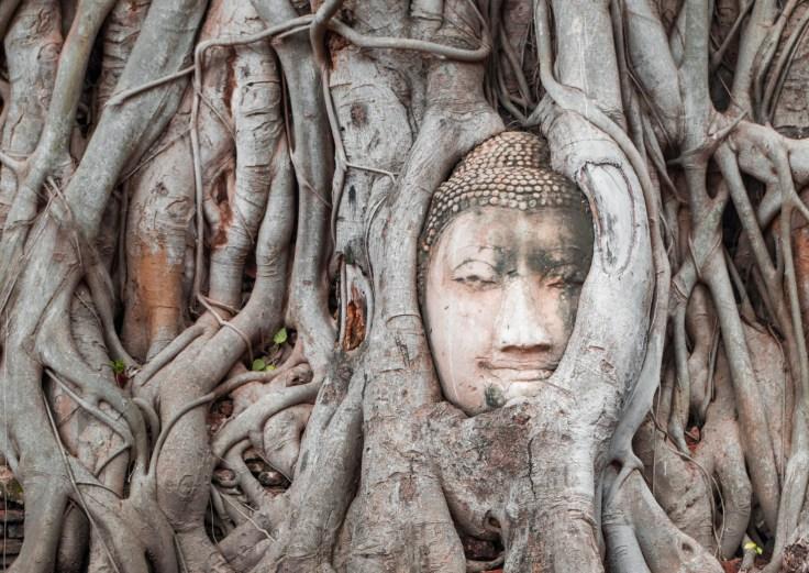 Ayutthaya Wat Maha That - Buddha Head tree