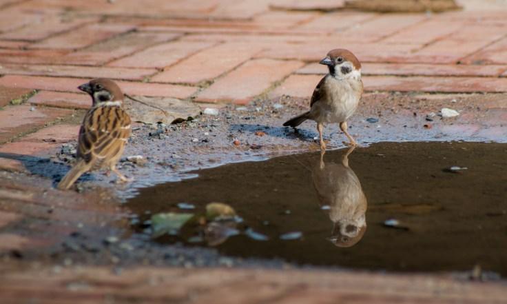 Ayutthaya oiseaux