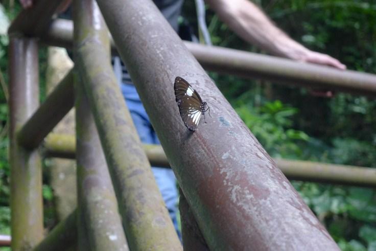 Haew Narok Waterfall Butterfly