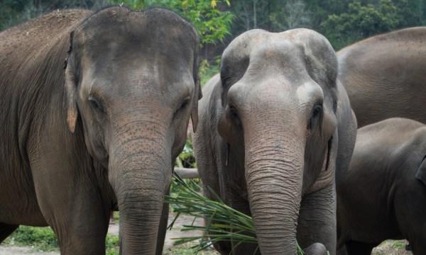 Elephant Rescue National Park