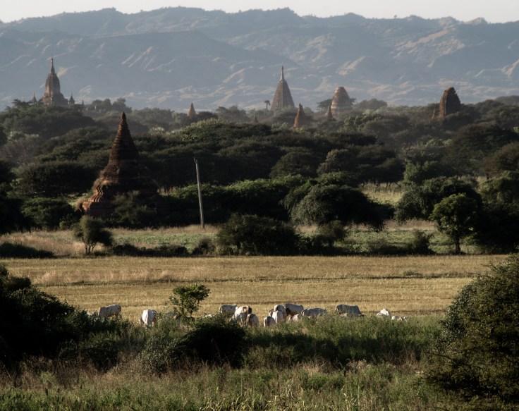 Bagan - Sunset Taung Guni