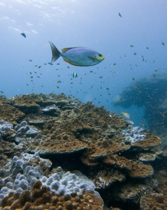 Thailande - Koh Bida - corail - poisson