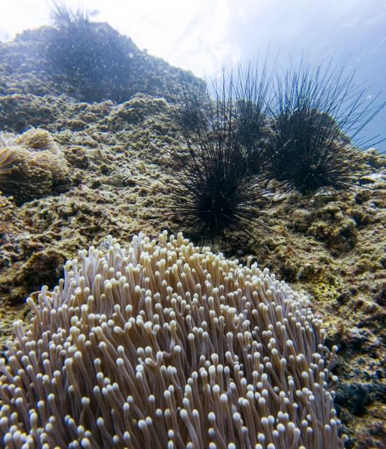 Thailande - Koh Bida - plongee - corail anemone oursin