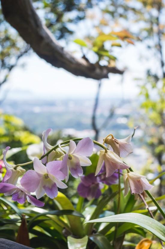 Thailande - Phuket - fleurs