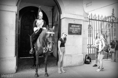 Pauvres chevaux...