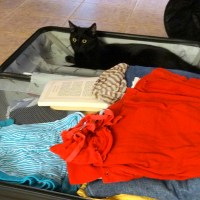 Emmener son chat en expatriation