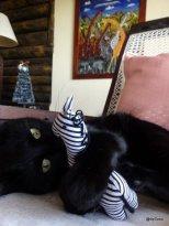 Chat-noir-joue-avec-zèbre