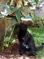 Chat-noir-renifle-une-plante