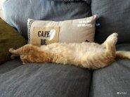 Chat-roux-dort-sur-le-canapé