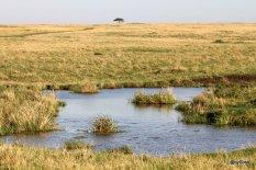 beau-paysage-masai-mara
