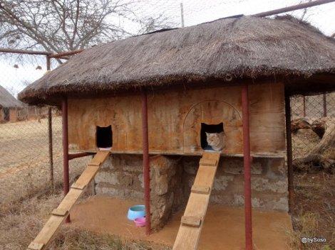 double-enclosure-yoani-yapperville