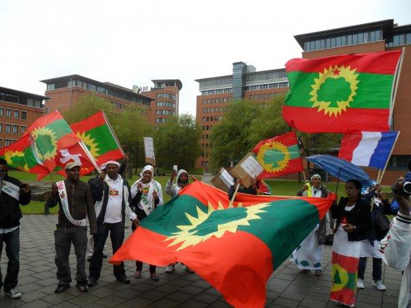 Oromo culture essay paper