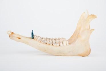 Marion Catusse, «Les enfants perdus» , 2014 Skull, resin, agar agar, mica, ink and glue