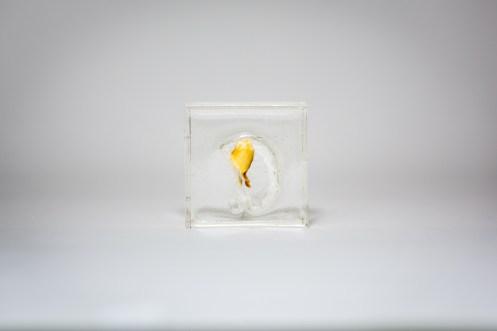 Marion Catusse, Les résines, 2014 Resin, polyurethane, agar agar, ink and glue, 5 cm x 5 cm