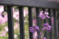 Fence with Flower